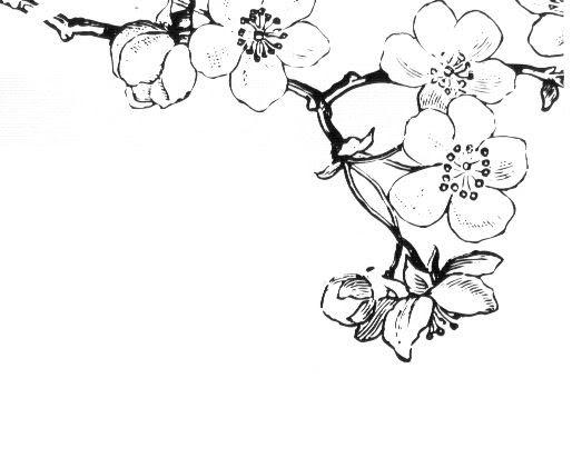 简笔画 手绘 线稿 514