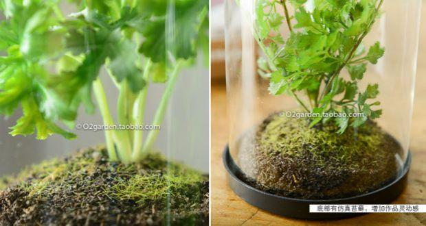 透明玻璃罩植物盆栽