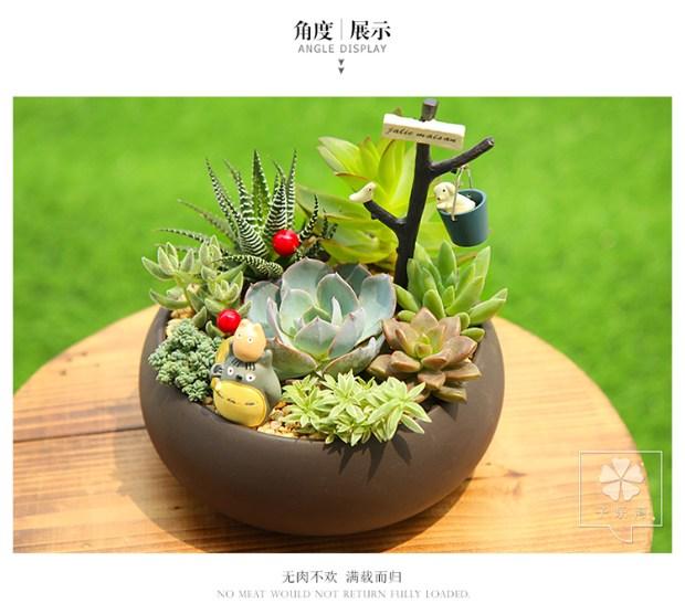 卡通多肉植物组合绿植盆栽